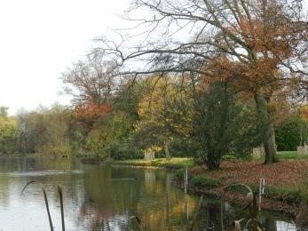 Natuurfoto in herfstperiodeaan het water