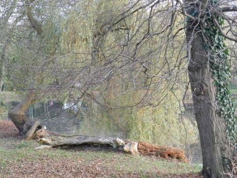 Natuurfoto met een boomstam aan de kant van het water