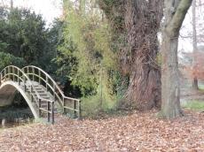 Natuurfoto aan een houten brug