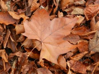 Natuurfoto van afgevallen bladeren met herfstkleuren