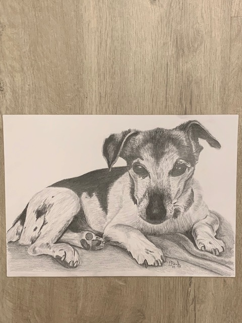 Potloodtekening hond Jacky